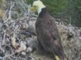 California Earthquake Rattles Eagle Nest