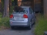 Cop Shoots Out Back Window To Free Bear From Car