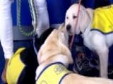 Canine Companions Visit 'Fox News @ Night'