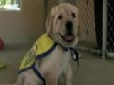 Company Provides Free Service Dogs To Veterans