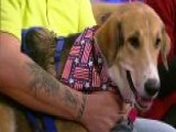Dog Saves Owner's Life After Seizure