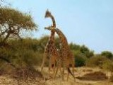 Discovery Takes Nature To Another Level In 'Africa'