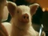 Does Geico Commercial Promote Bestiality?