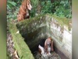 Dog's Best Friend: Canine Stays With Her Trapped Companion
