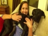 Dogs Don't Like Hugs?