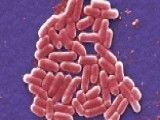 Deadly Superbug Could Be Spell End Of Antibiotics