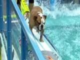 Dogs Show Off Surfing Skills On Portable Wave Machine