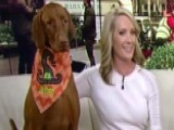 Dana Perino Talks 'Let Me Tell You About Jasper . . .'