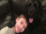 Disabled Boy Kicked Off Flight When Service Dog Is 'too Big'