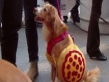 Dogs Walk In A Halloween Fashion Show