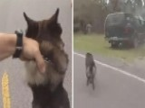 Deputy And His K9 Partner Split Up To Catch Suspects