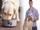 Dr. Eric Mueller's Tips For Fighting Pet Obesity