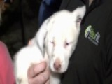 Deaf Puppy Rescued From Fifty-foot Deep Hole In Alabama