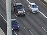 Dog Loose On Highway Scrambles Evening Commute