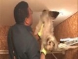 Dog Rescued From HVAC Duct