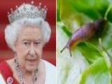 Did Queen Elizabeth Really Find A Slug In Her Salad?