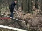 Deer Caught In Soccer Net Saved By Police