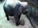 Elephant Baby Watch
