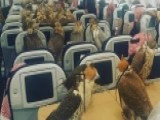 Even Falcons Need Passports To Fly... On Planes