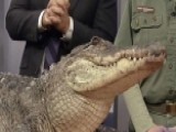 Exotic Animals Visit 'Fox & Friends'