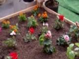 Essentials Needed For Upstart Gardeners