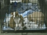 Effort To Reunite Pets Separated From Owners By Hurricanes
