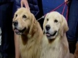 Furry Friends Offer Tail-wagging Breaks