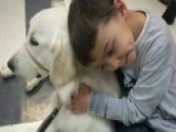 Family Battles School Over Boy's Service Dog
