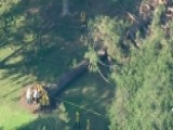 Falling Tree Injures Eight Children At Calif. Summer Camp