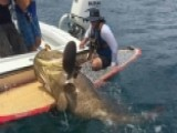 Fisherman's Battle With Goliath Grouper Goes Viral