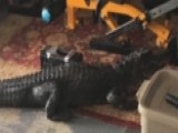 Florida Woman Shocked To Find 6-foot Gator In Her Garage