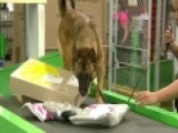 Feds Use Dogs To Sniff Out Drugs In Mail Packages