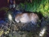 Firefighters In Colorado Rescue Horse From Mud Pit