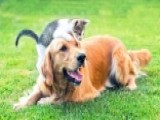 FDA Warns Flea And Tick Meds Linked To Neurological Problems In Pets