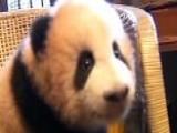 Giant Panda Cub Mugs For Cameras