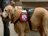 Group Trains Rescue Dogs To Be Service Animals For Veterans