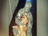 Golden Retriever Welcomes Soldier Home