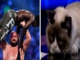 Grumpy Cat Hosts WWE Monday Night Raw