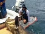 Goliath Grouper Drags Fisherman Off His Paddleboard