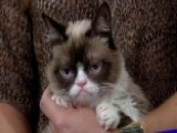 Grumpy Cat Teaches How To Be A 'No-It-All' In New Book