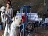 Georgia Makes It Legal For Dogs To Dine Out With Owners