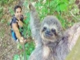 Going Viral: Smiling Sloth Climbs Its Way To Internet Fame