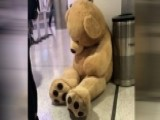 Giant Bear An Online Star After Being Discarded At Airport