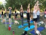 Goats Get In The Mix At Las Vegas Yoga Session