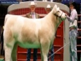 Grand Champion Steer Fetches $200,000