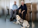 George HW Bush Gets A Service Dog