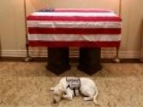 George H.W. Bush's Service Dog, Sully, Is Honored