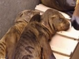 How Sea World Is Helping Sea Lions After Oil Spill