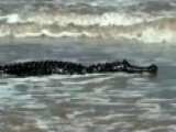 Huge Gator Spotted On Texas Beach