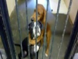 Hugging Pups Rescued Together Are Seeking Adopter